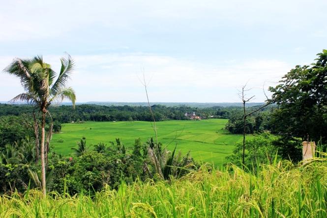 Dari bukit  ini,saya bisa lihat hamparan sawah dan masjid tempat saya dzuhuran tadi... *tarik nafas*