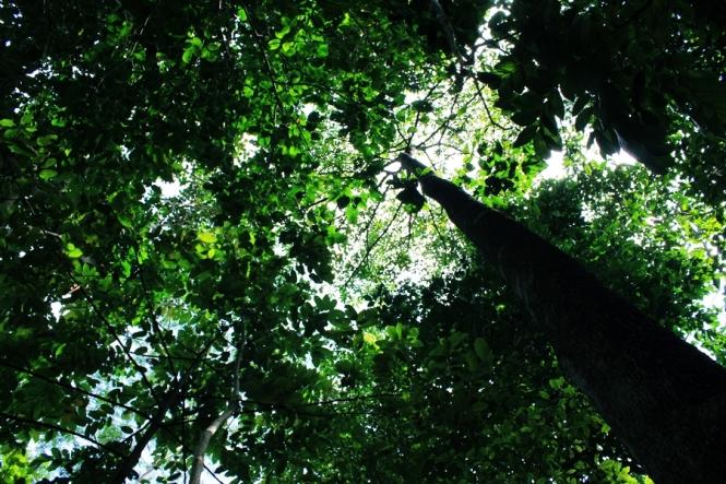 Dipayungi pepohonan...duh...adem bener