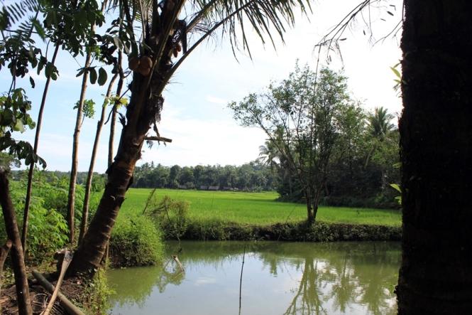 landscape persawahan dan emang